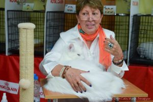 Cat Show 19-20 of May in Minsk