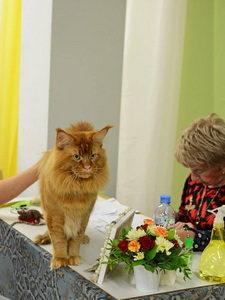 Ch.RU*UNICUM M'Tamerlan at Cat Show