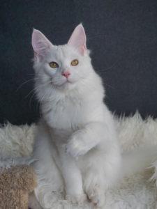 Sheirisse (Sana) CoolShade- 5,5 months